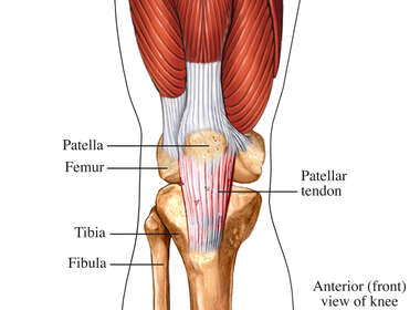 Patellar Tendon