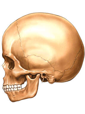 Child Skull, Lateral View