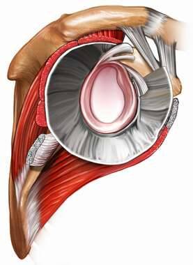 Lateral View of the Shoulder Joint and Glenoid Labrum