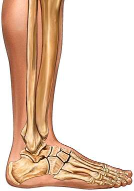 Ankle: lateral view