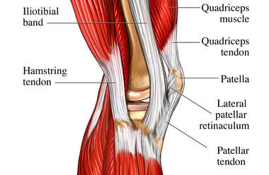 Tendons of the Lateral Knee