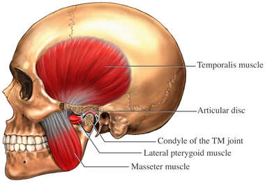 Temporomandibular Joint - TMJ