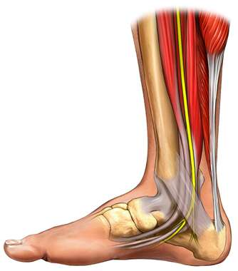 Medial View of Foot and Ankle
